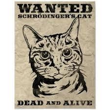 schroedinger cat