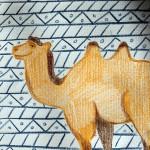 La divisione dei cammelli