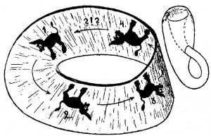 figura 6 - La superficie di Möbius e la bottiglia di Klein.